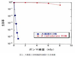 大腸菌と放射線耐性細菌の生存曲線