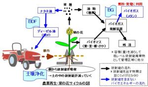 菜の花サイクル
